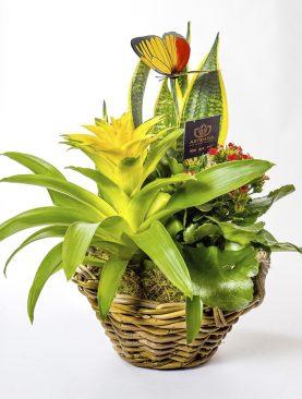 Ramo de plantas modelo Andrómeda